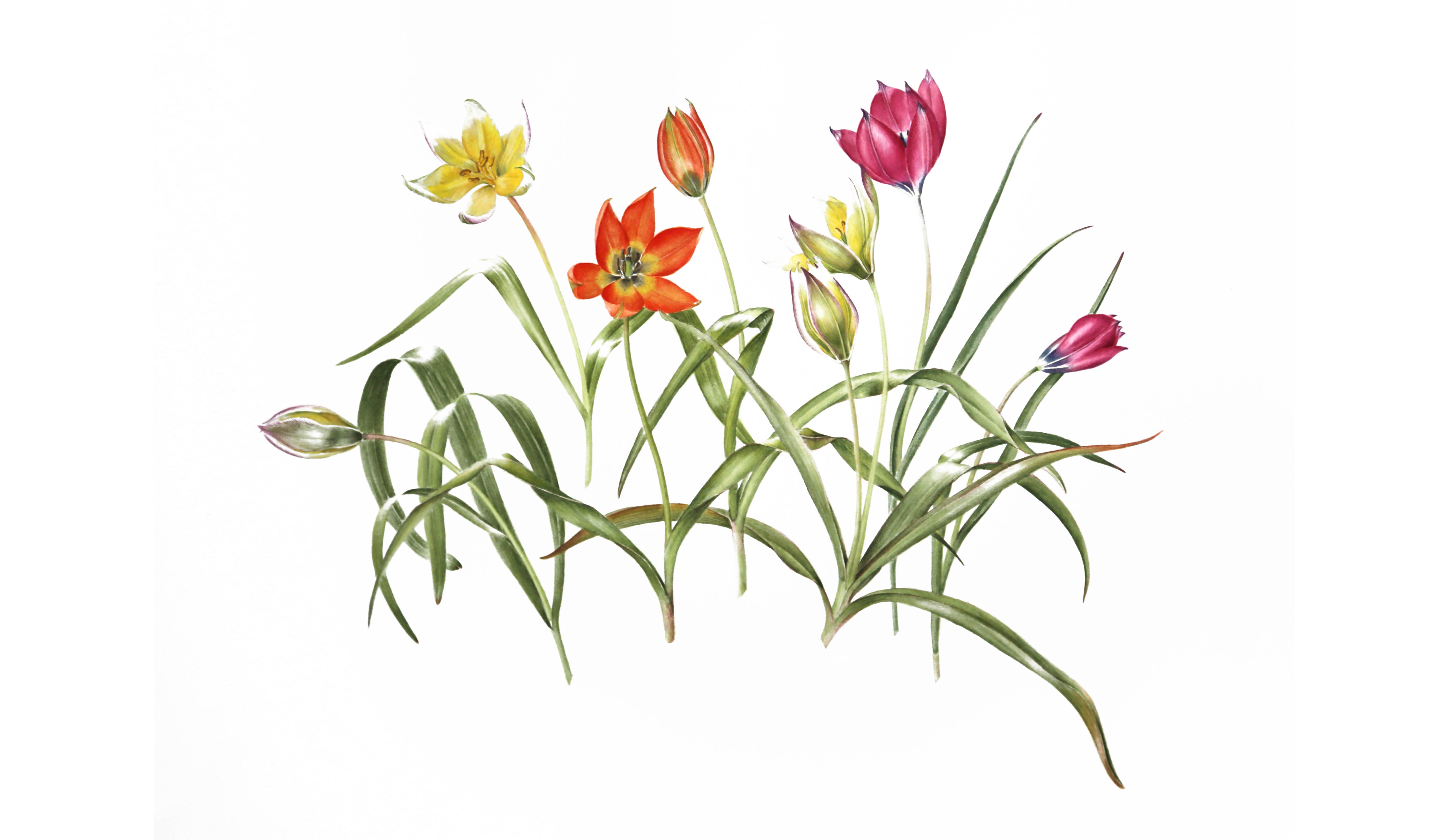colours of the winter garden watercolours by botanical artist sue